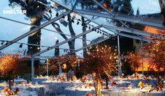 It is quiet a nice chioce to hold your wedding under a transparent tent when the sky is clean .The sun or the moonlight can  shine through the clear top into the hall to make your wedding more romantic
