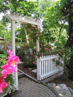 Rose Garden Arbor, William Baffin closeup, John Davis on Arbor