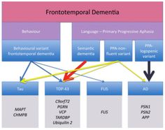 Figure 1 represents the clinical and pathological subtypes of Frontotemporal…