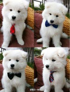 #Animal pet cute  dog  Like it, Thanks :)  See more Cute Pets---  http://robrayo.com