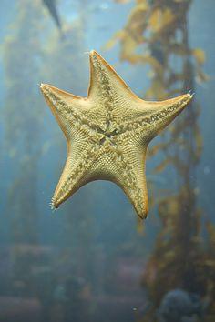 Starfish - ©/cc Nicole Hanusek - www.flickr.com/photos/nhanusek/125281064/in/set-72057594098389669#