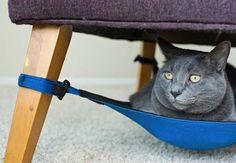 Bem Legaus!: Rede felina