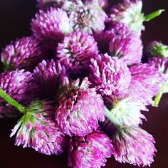 The herb of immortality, red clovers are sacred to women,  motherhood, and the goddess. One of the oldest cultivated plants in the world it has been used medicinally & magically. Rich in nutrients I'm going to batter & fry these for fritters (an old pioneer recipe!) ~ Danielle