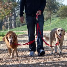 Double Dog Leash Black - Double Dog Leash - Walking two dogs can be a bit like an avant-garde modern dance performance with you twirling around trying to untangle two leashes and a stubborn duo of dogs. It allows you to walk your besties further apart, closer together, or at different lengths, giving you the power to control the movements. It also means you only have to hold one leash, which, let's face it, is easier, safer, and so much more comfortable. (Many colors to choose from)