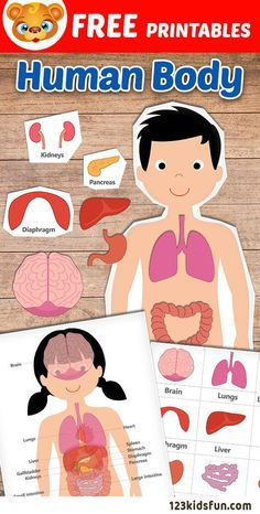 FREE Human Body Printables for Kids. Teach your kids about their bodies and the different organs. Great for homeschooling to learn about the human body. #HumanBody #homeschooling #printables