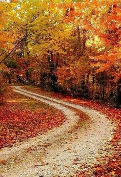 This is on my bucket list. To drive down an old country road in the fall and have someone take a picture behind you so you can see all the leaves flying up. love the fall colors! Beautiful World, Beautiful Places, Trees Beautiful, Winding Road, All Nature, Belle Photo, Fall Halloween, Pretty Pictures, The Great Outdoors