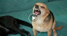 Sabe Como Espirra Cada Animal? http://www.funco.biz/como-espirra-cada-animal/