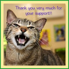 """Titus is thrilled to announce more donations for our July 29th, """"An Evening with Jackson Galaxy"""" fundraising event with Shadow Cats! You'll find these items in the Silent Auction or as part of our guests swag bags! Stay tuned for more each day!  Thank you to all the friends who care about animals and support Shadow Cats!  Wine Sensation: A 1 month wine club gift certificate! Check them out at www.winesensation.com or on Facebook  Lost Pines Golf Club: Gift Certificate for golf out at the…"""