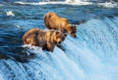 The sun refuses to set and the salmon run upstream, discover all the wonders of summer in Alaska. #Alaska #Travel