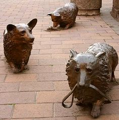 Three life-sized bronze Corgis installed in 2003 as commemoration of The Queen of New Zealand's 50th jubilee.