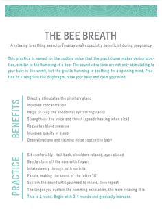 the bee breath - pranayama : wholehearter