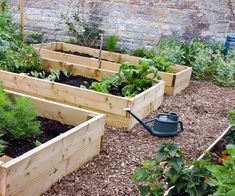 Your quick guide to planting vegetables in October NZ