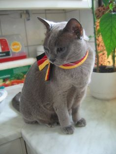 Germany cat from Hetalia! Perfect cat cosplay. I am so getting a cat this color, just to do this :)