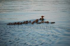 just ducky by Florina Praamsma-Korf on Etsy