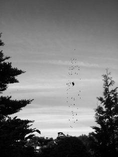 Spin met vliegen surrealistisch spiderweb landschap macro