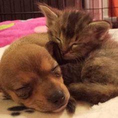 Fueron abandonados cada uno por su lado con tan sólo unas semanas de vida, pero sus caminos se cruzaron y se convirtieron en amigos inseparables. http://bit.ly/1mDKvxl