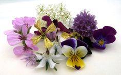 Edible-Flowers-10-May-2009.jpg 403×252 pixels