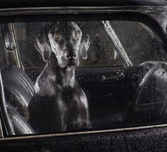 LE REVELATEUR #32 : Martin Usborne, The Silence of Dogs in Cars http://www.competencephoto.com/The-Silence-of-Dogs-in-Cars-Martin-Usborne-serie_a2378.html (en français) THE DEVELOPER #32 : Martin Usborne, The Silence of Dogs in Cars http://www.competencephoto.com/The-Silence-of-Dogs-in-Cars-Martin-Usborne-series_a2379.html (in English)