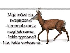#sarenka #humor #smieszne