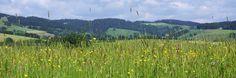 Camping Kirchzarten ***** Freundlich, Mountains, Nature, Travel, Outdoor, Front Desk, Campsite, Outdoors, Naturaleza