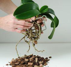 Plant Hanger, Flora, Planter Pots, Gardening, Porcelain Ceramics, Amigurumi, How To Grow Plants, Lawn And Garden, Plants