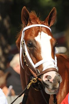 El Padrino, kentucky derby contender and has an absolutely adorable face! 2012