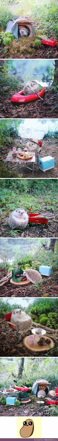 This camping hedgehog is the cutest thing you see today #pettech