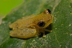 frog friend by pbertner, via Flickr