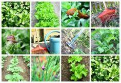Bauerngarten anlegen - Anleitung und Pflanzplan