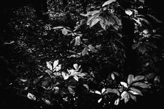 Klagenfurt, Shades Of Grey, Celestial, Black And White, Outdoor, Water Pond, Outdoors, Black N White, Shades Of Gray Color