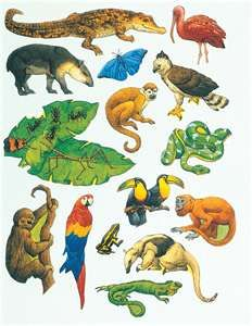 Rainforest animals are very fascinating. and most often colorful