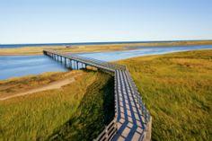 Kouchibouguac National Park NB Parks Canada, Beach Boardwalk, New Brunswick, Natural Wonders, Virtual Tour, Ecology, Conservation, Outdoor Blanket, Country Roads