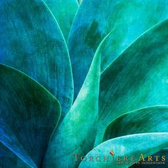 Mexican AgaveBlue Agave Art Southwest Art by EricZippeImagemaker, $22.00