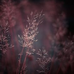 whispers of rosy winter .. X ღɱɧღ || we are only what we know by Lain-AwakeAtNight on deviantART