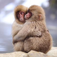 Kisses and hugs aren't just for humans, the whole animal kingdom needs a cuddle every so often. Here are 18 of the cutest romantic moments between animals. Cute Baby Animals, Animals And Pets, Funny Animals, Wild Animals, Primates, Animals Images, Animal Pictures, Beautiful Creatures, Animals Beautiful