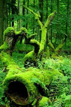 Man kan lägga dit några mossiga grenar för att få en ännu mer trolsk stämning.