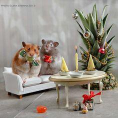 happy new year by Elena Eremina on 500px