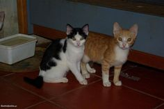 1 Gatinho bonito - gatinho - à venda - Animais domésticos, Setúbal - CustoJusto.pt