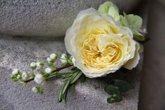 A Boutonniere of a beautiful Patience Rose with fresh Rosemary, Eucalyptus, Blossom and Hydrangea