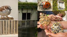 Un balcon pour la biodiversité en hiver Découvrir idées de fabrication et conseils pour aider la faune et la flore à passer l'hiver sur balcon, terrasse, rebord de fenêtre...
