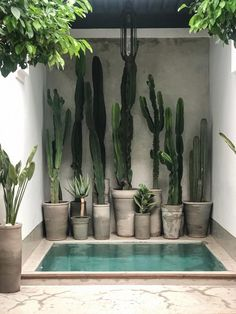 For cactus lovers everywhere via 🌵 📷 / design at . Cacti And Succulents, Cactus Plants, Cactus Art, Cactus Flower, Succulents Garden, Cactus Drawing, Succulent Planters, Outdoor Planters, Concrete Planters