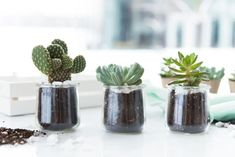 Oui by Yoplait pots make the perfect holder for succulents. Turn them into centerpieces, party gifts or apartment decor. Diy Home Crafts, Jar Crafts, Diy Craft Projects, Succulent Gardening, Succulent Ideas, Diy Candle Holders, Oui Oui, Canning Jars, Hanging Planters