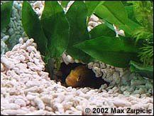 DIY fish cave from rain gutter