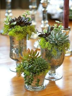 simple and scalable succulent centerpieces give height and sophistication to any size table!