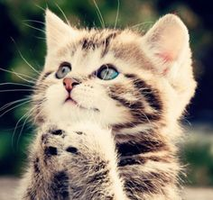 super lieff katje xx
