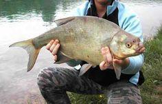 Pescareonline: Pesca in Drava nel 2005