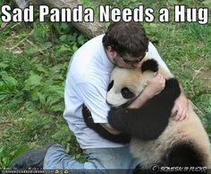 sad panda :( I totally want to hug a sad panda!!!!