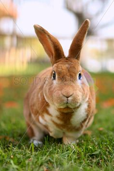 stock photo of brown bunny outside