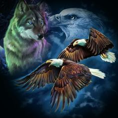 wat is dat mooi he Native American Pictures, Native American Art, Wolf Craft, Wolf Wallpaper, Black Wallpaper, Beautiful Wolves, Beautiful Eyes, Animals Beautiful, Eagle Pictures