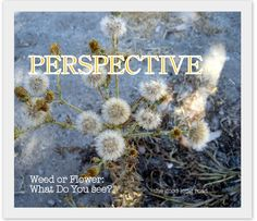 What do you see? Weeds or flowers? How my toddler teaches mommy about perspective...(and more)